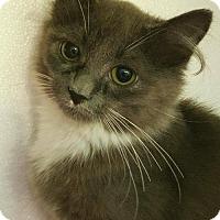 Adopt A Pet :: Cela - Germantown, MD