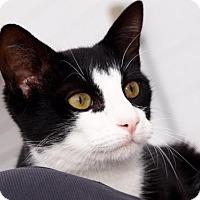 Adopt A Pet :: Paco - St.Ann, MO