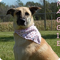 Shepherd (Unknown Type) Mix Dog for adoption in Bucyrus, Ohio - Maggie