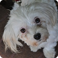 Adopt A Pet :: Francine - Atlanta, GA