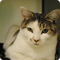 Adopt A Pet :: Cheryl - Windsor, VA