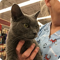 Adopt A Pet :: Princess - Germantown, MD
