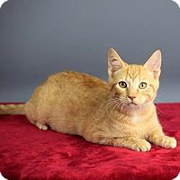 Adopt A Pet :: Garfield - Columbia, IL