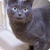 Adopt A Pet :: Rustler - Merrifield, VA