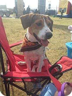 Hound (Unknown Type) Mix Dog for adoption in St. Francisville, Louisiana - Doug
