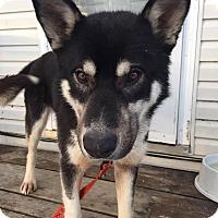 Adopt A Pet :: BEAU - Winnipeg, MB