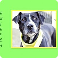 Adopt A Pet :: BRIELLA
