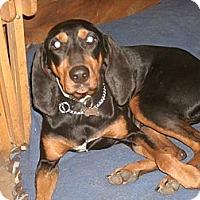 Adopt A Pet :: Sophia - Toledo, OH