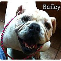 Adopt A Pet :: Bailey - Decatur, IL