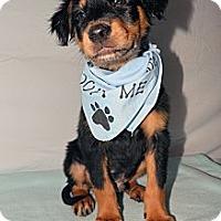 Adopt A Pet :: Rusty - Aurora, CO