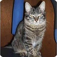 Adopt A Pet :: Scarlet (DS) - Little Falls, NJ