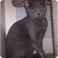 Adopt A Pet :: Gizmo - St. Louis, MO
