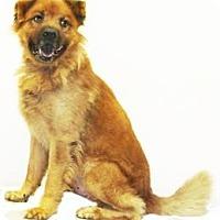 Adopt A Pet :: Butch - Inverness, FL