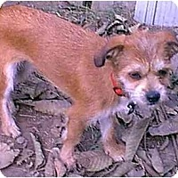 Adopt A Pet :: Diedra - dewey, AZ