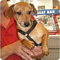 Adopt A Pet :: Muttie - Kingwood, TX