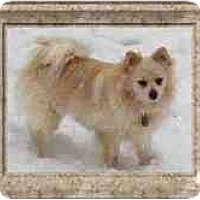 Adopt A Pet :: Rufus - Chesapeake, VA