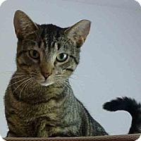 Adopt A Pet :: Stinker - Gaithersburg, MD
