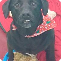 Adopt A Pet :: Knuks - Sneads Ferry, NC