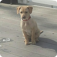 Adopt A Pet :: Gucci - Marlton, NJ