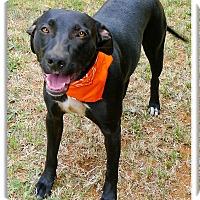 Adopt A Pet :: Bonita adoption pending - Sacramento, CA