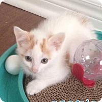 Adopt A Pet :: Janus - Hamilton, ON