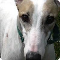 Adopt A Pet :: Jackson - Hialeah, FL