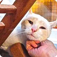 Adopt A Pet :: Aleksander - Davis, CA