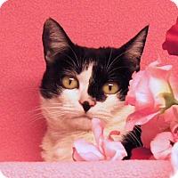 Adopt A Pet :: Aimi - Colorado Springs, CO