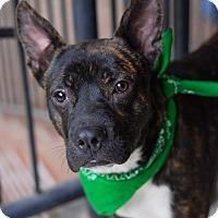 Adopt A Pet :: Gumbeau - Baton Rouge, LA