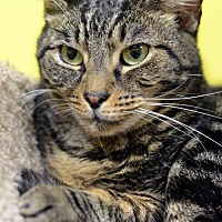 Adopt A Pet :: Pluto 7348 - Atlanta, GA