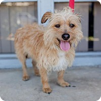 Adopt A Pet :: Elastigirl - San Diego, CA
