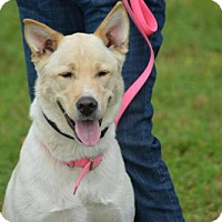 Shepherd (Unknown Type) Mix Dog for adoption in Cleveland, Texas - Sierra