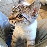 Adopt A Pet :: LA-Rachel - Devon, PA