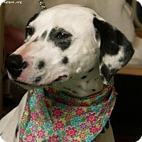 Adopt A Pet :: Meadow (Mylee) - Newcastle, OK