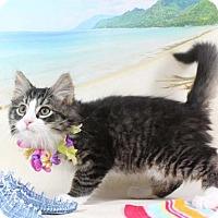 Adopt A Pet :: Tommy - Harrisonburg, VA