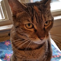 Adopt A Pet :: Athena - West Orange, NJ
