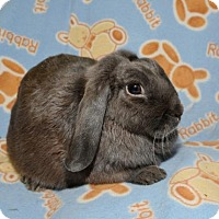 Adopt A Pet :: Winter - Chesterfield, MO