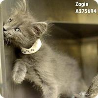 Adopt A Pet :: ZAGIN - Conroe, TX