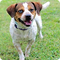 Adopt A Pet :: BUSTER BROWN - Washington, DC