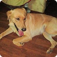Adopt A Pet :: MARLEY - Rocky Hill, CT