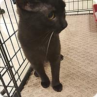 Adopt A Pet :: Tinker bell - Ortonville, MI