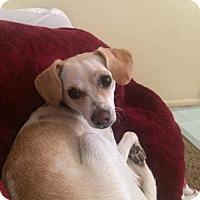 Adopt A Pet :: Rosa - Salt Lake City, UT