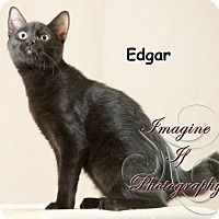 Adopt A Pet :: Edgar - Oklahoma City, OK