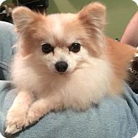 Adopt A Pet :: Kera - Sterling Heights, MI