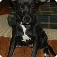 Adopt A Pet :: Abby - Manning, SC