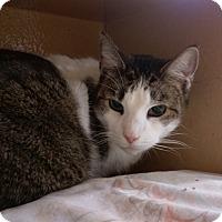 Adopt A Pet :: Mumbles - Columbus, OH
