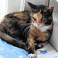 Adopt A Pet :: Catalina - Morganton, NC