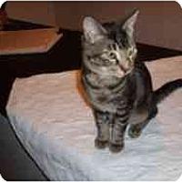 Adopt A Pet :: Orlando - Hamburg, NY