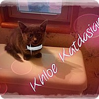 Adopt A Pet :: Khloe Katdasian - Washington, DC