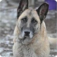 Adopt A Pet :: Sasha - Hamilton, MT